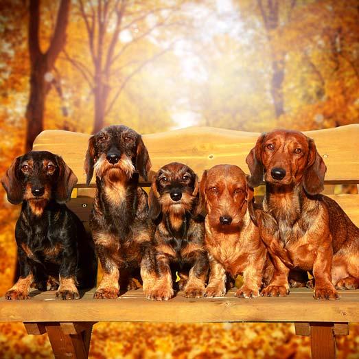 Bilder von unseren Hunden